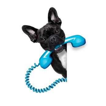 Hund mit Telefon